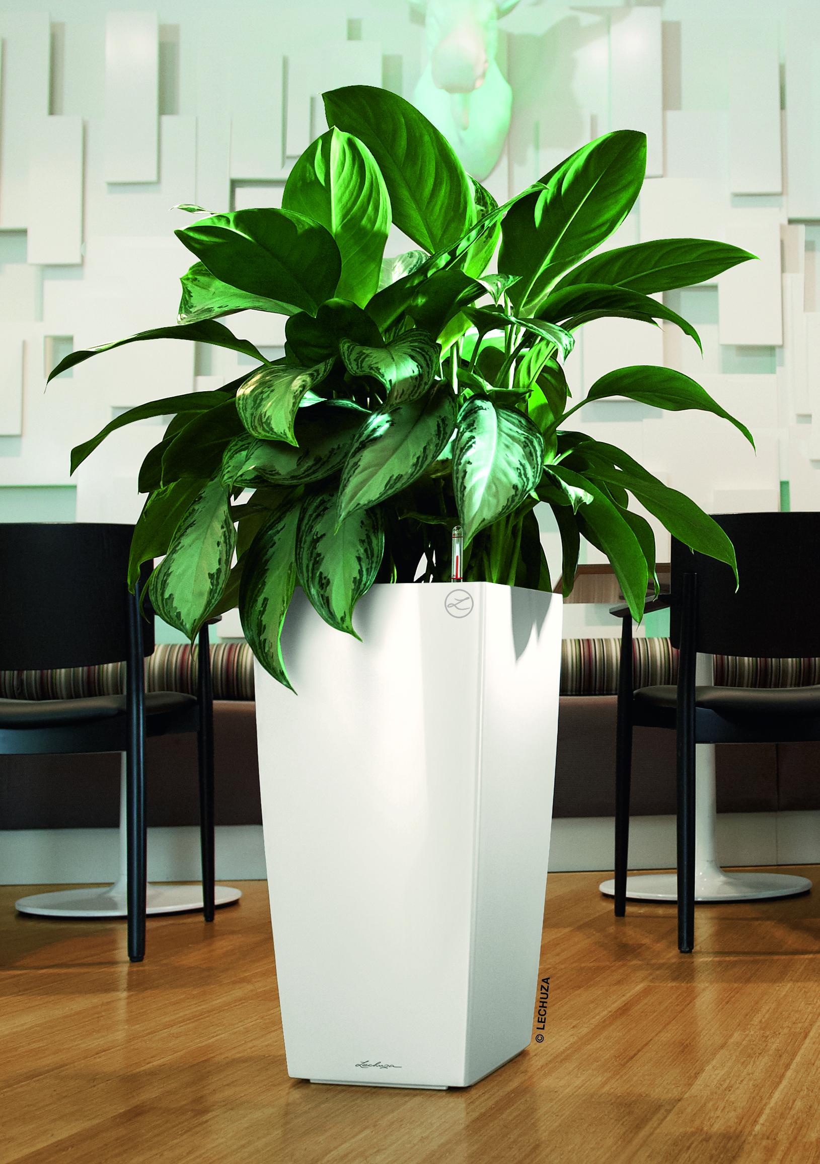 dieffenbachia raumbegr nung von systemgr n. Black Bedroom Furniture Sets. Home Design Ideas